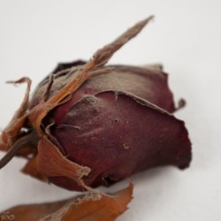 Dried Rose Sculpture