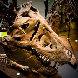 Tyrannosaur - Adult (Thomas)